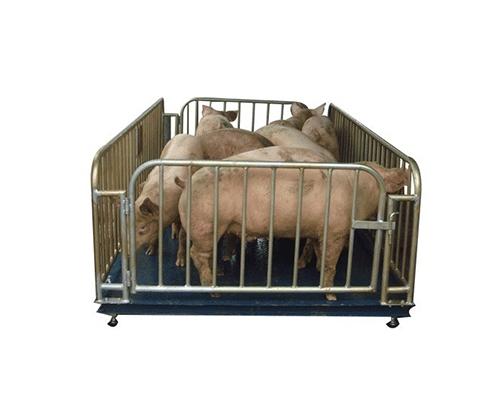 南宁猪栏秤